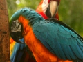 Foz do Iguazu