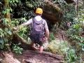 Tree Top Explorer
