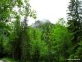 2011 - Deutschland: Mangfallgebirge - Schildenstein