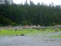 WCT zwischen Tsusiat Falls und Cribs Creek