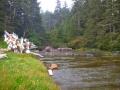 WCT Cribs Creek