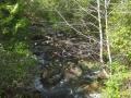 WCT zwischen Bamfield und Michigan Creek