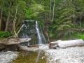 WCT zwischen Cribs Creek und Walbran Creek