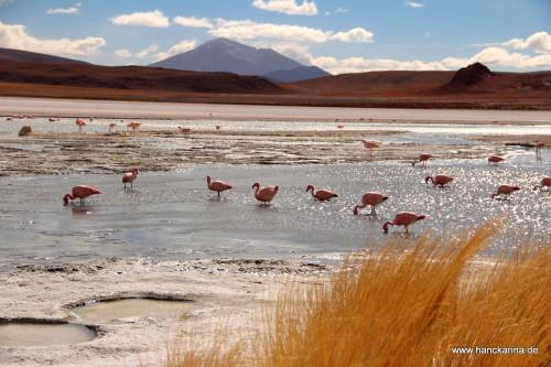 Flamingos in einer Lagune auf dem Aliplano